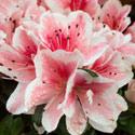 North Lake Garden Club @ Roanoke Council of Garden Clubs | Cave Spring | Virginia | United States